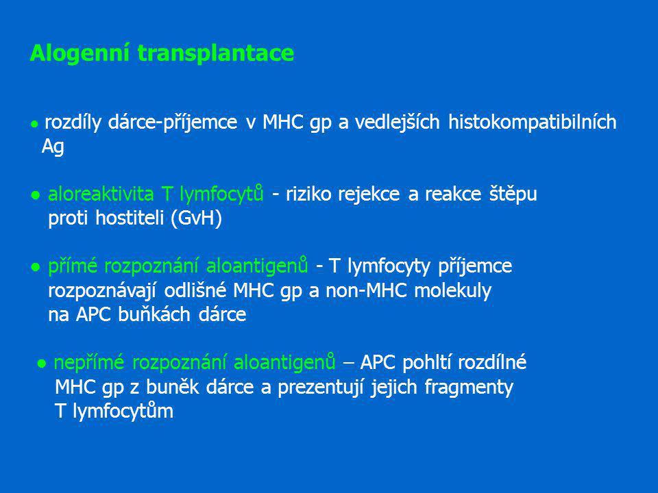 Alogenní transplantace ● rozdíly dárce-příjemce v MHC gp a vedlejších histokompatibilních Ag ● aloreaktivita T lymfocytů - riziko rejekce a reakce štěpu proti hostiteli (GvH) ● přímé rozpoznání aloantigenů - T lymfocyty příjemce rozpoznávají odlišné MHC gp a non-MHC molekuly na APC buňkách dárce ● nepřímé rozpoznání aloantigenů – APC pohltí rozdílné MHC gp z buněk dárce a prezentují jejich fragmenty T lymfocytům