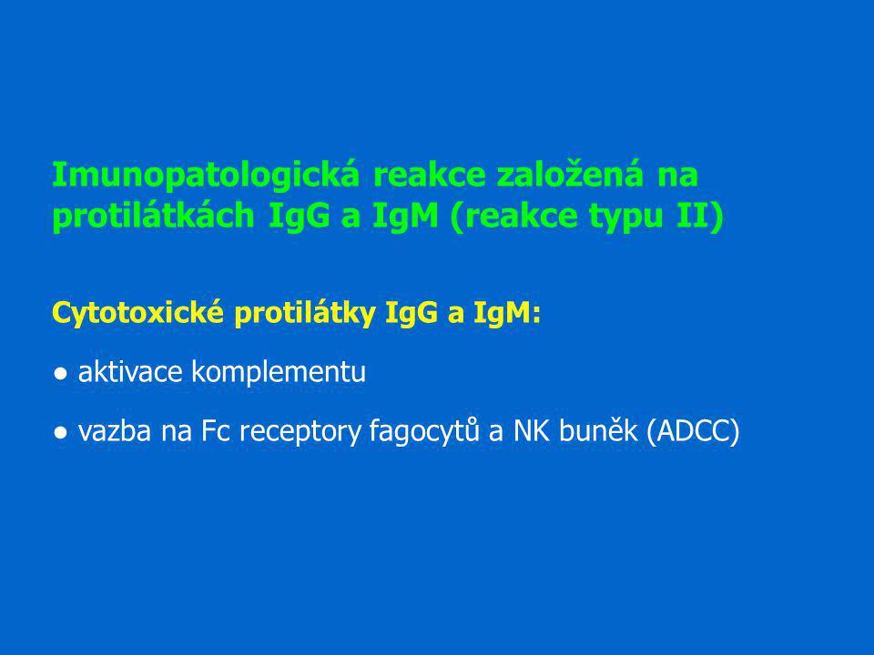 Imunopatologická reakce založená na protilátkách IgG a IgM (reakce typu II)
