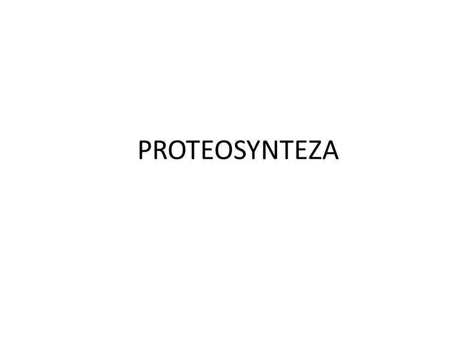 PROTEOSYNTEZA