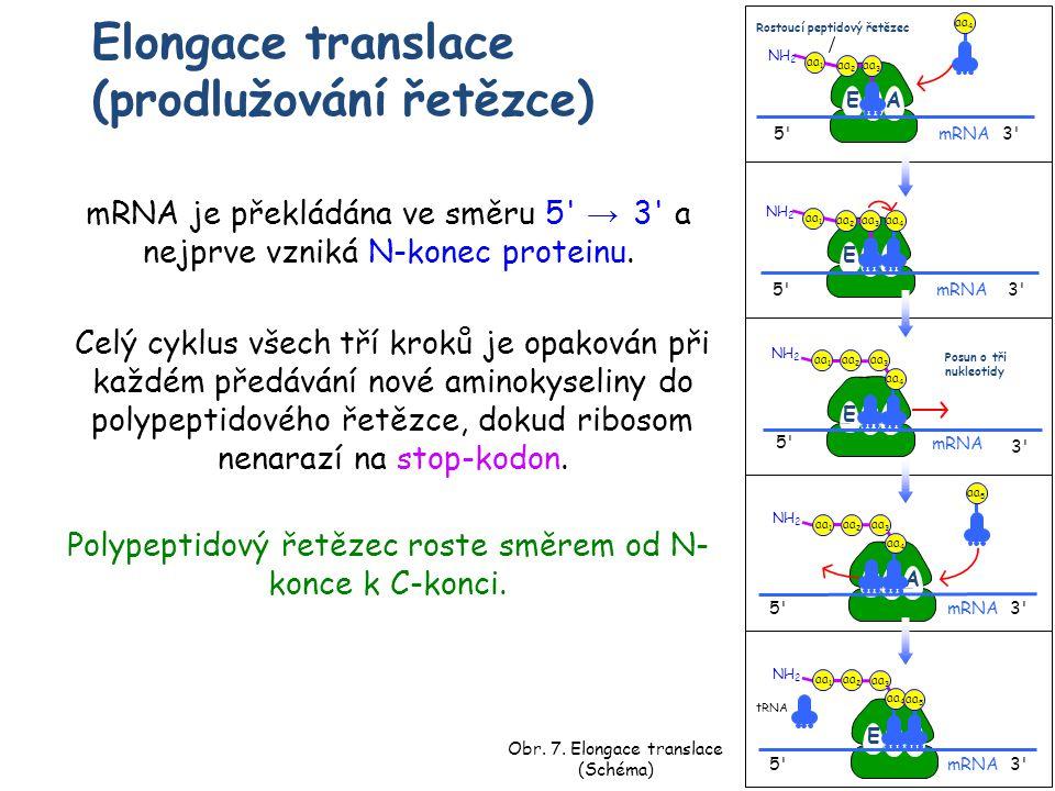 Elongace translace (prodlužování řetězce)