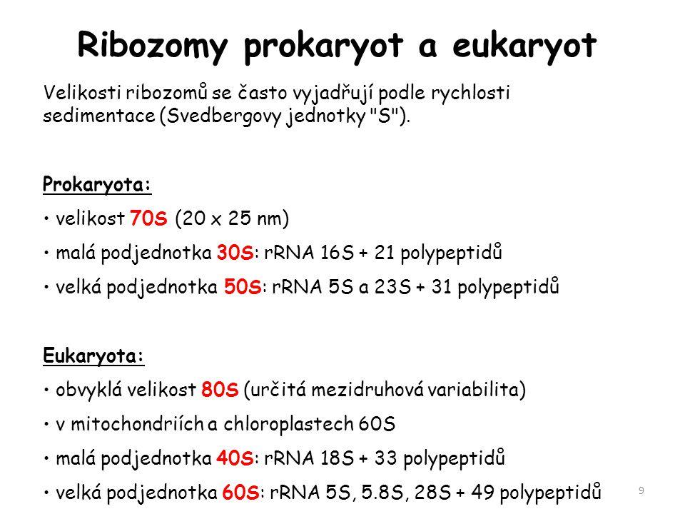 Ribozomy prokaryot a eukaryot