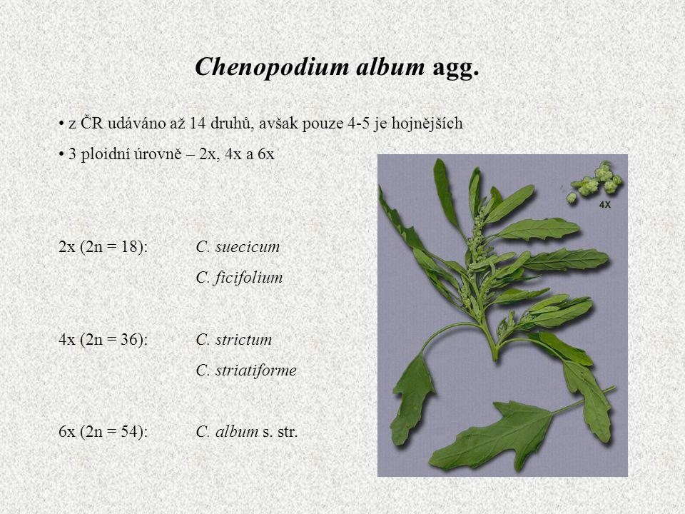 Chenopodium album agg. z ČR udáváno až 14 druhů, avšak pouze 4-5 je hojnějších. 3 ploidní úrovně – 2x, 4x a 6x.