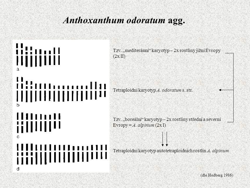 Anthoxanthum odoratum agg.