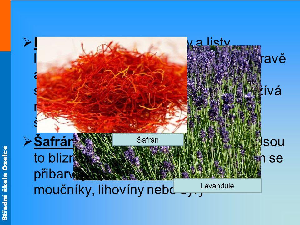 Levandule – sušené květy a listy levandulového keře