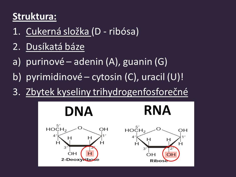 Struktura: Cukerná složka (D - ribósa) Dusíkatá báze. purinové – adenin (A), guanin (G) pyrimidinové – cytosin (C), uracil (U)!