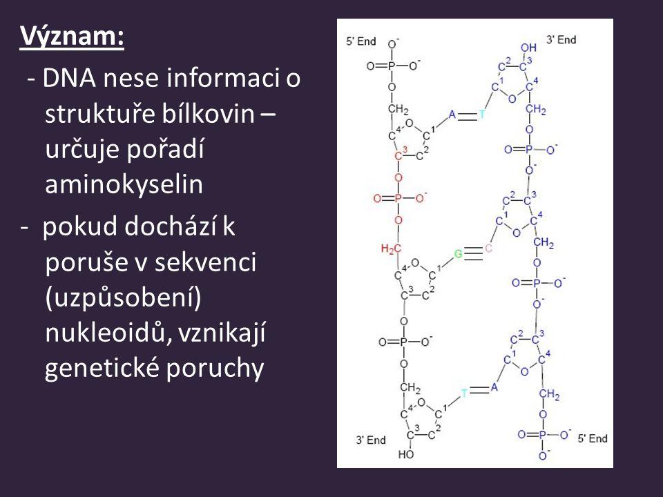 Význam: - DNA nese informaci o struktuře bílkovin – určuje pořadí aminokyselin.