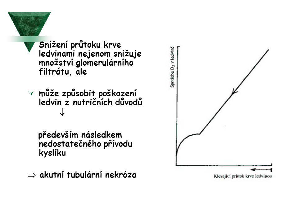 Snížení průtoku krve ledvinami nejenom snižuje množství glomerulárního filtrátu, ale