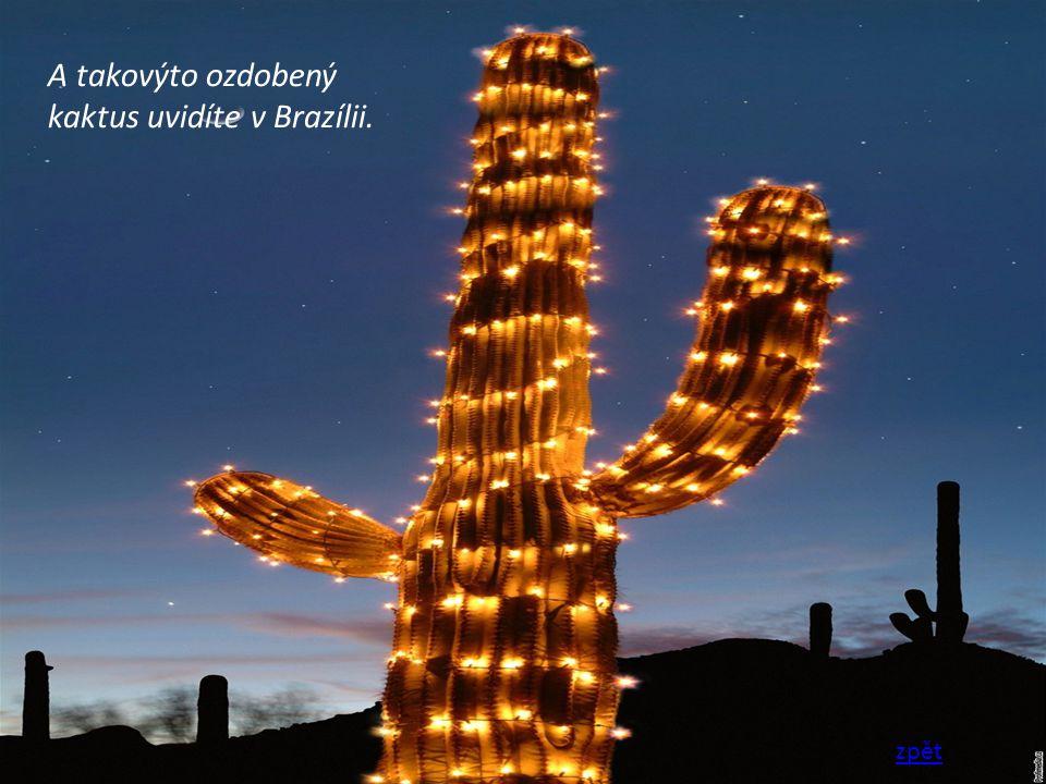 A takovýto ozdobený kaktus uvidíte v Brazílii.
