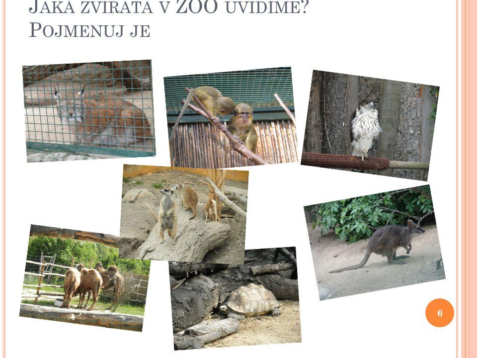 Jaká zvířata v ZOO uvidíme Pojmenuj je