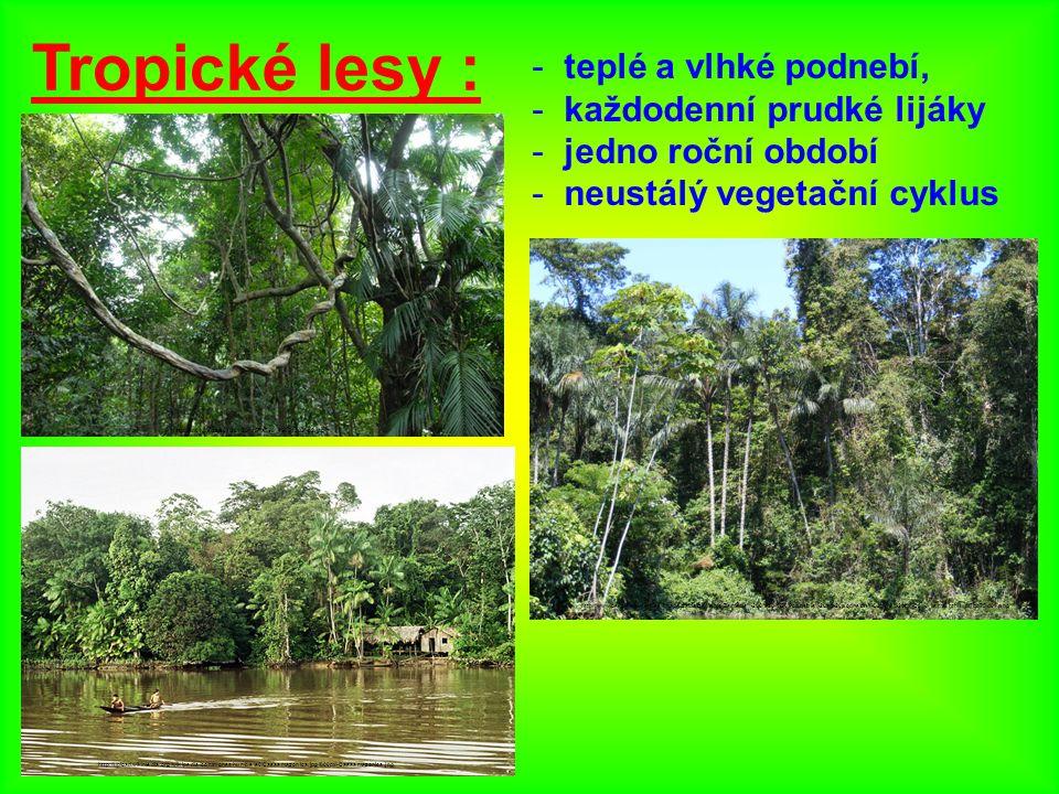 Tropické lesy : teplé a vlhké podnebí, každodenní prudké lijáky
