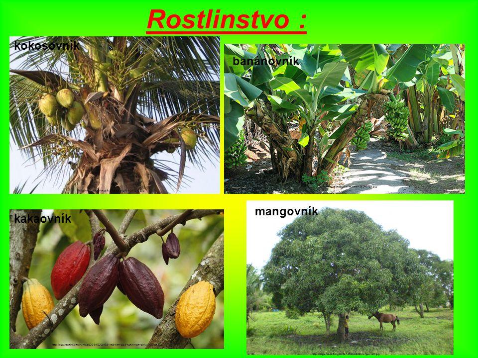 Rostlinstvo : kokosovník banánovník mangovník kakaovník