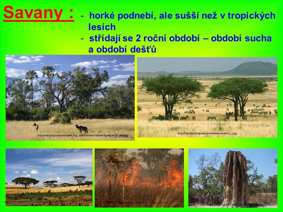 Savany : horké podnebí, ale sušší než v tropických lesích
