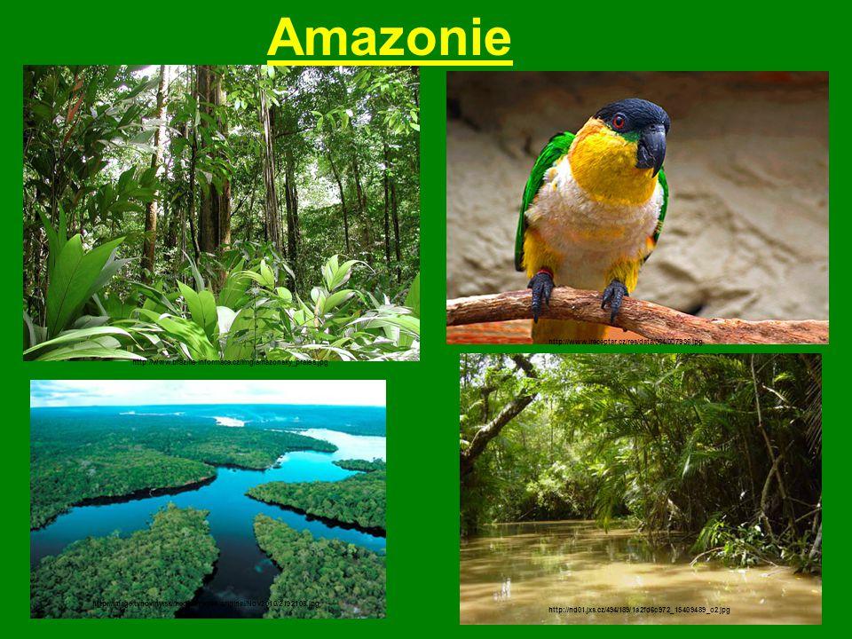 Amazonie http://www.ireceptar.cz/res/data/064/007936.jpg