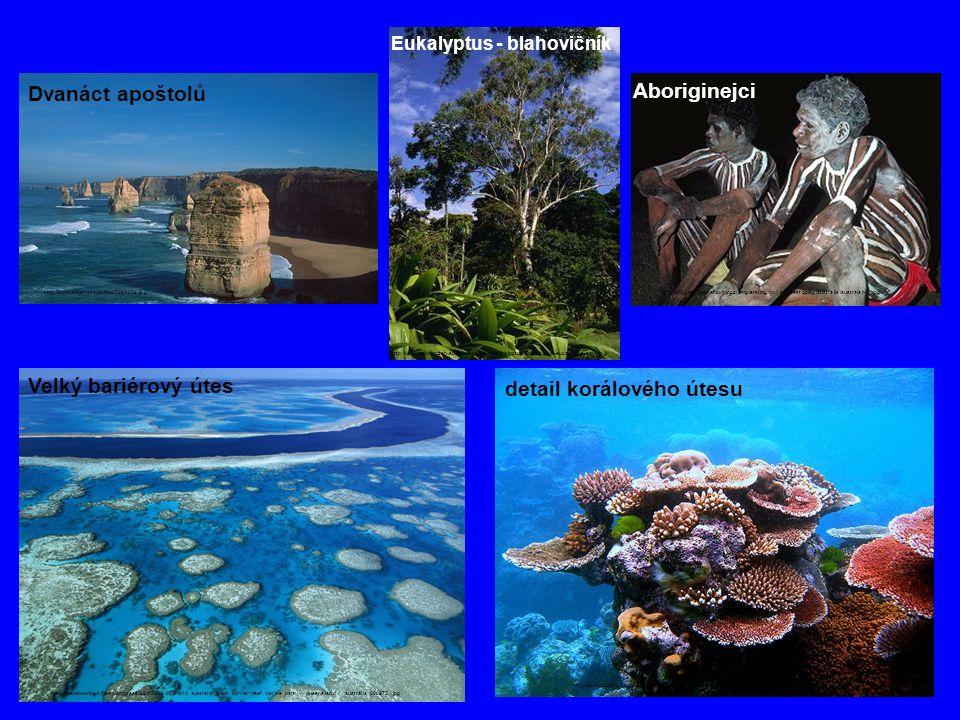 detail korálového útesu
