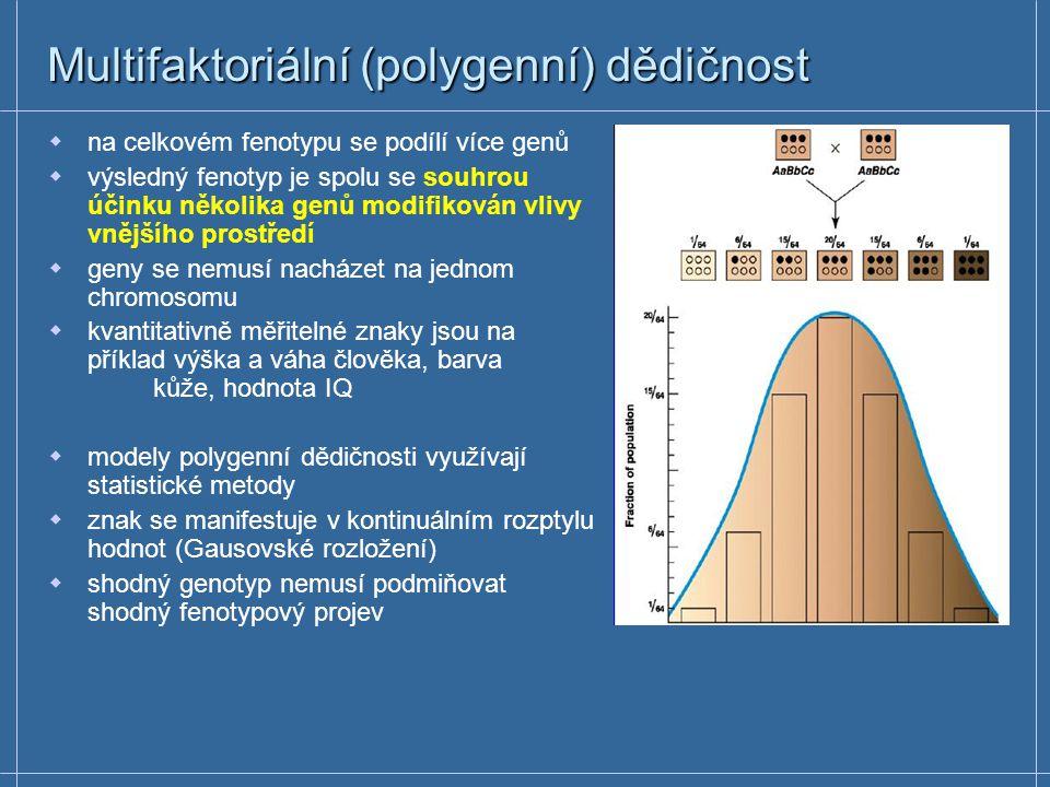 Multifaktoriální (polygenní) dědičnost