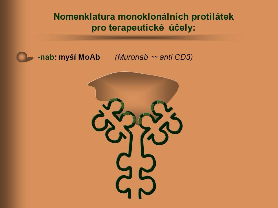 Nomenklatura monoklonálních protilátek pro terapeutické účely: