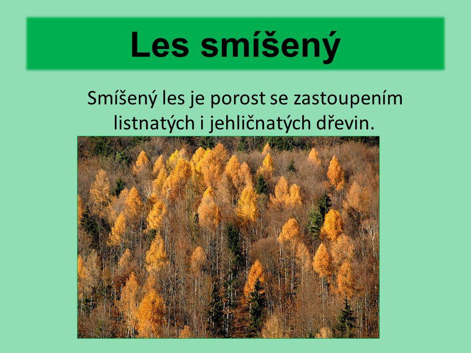 Smíšený les je porost se zastoupením listnatých i jehličnatých dřevin.