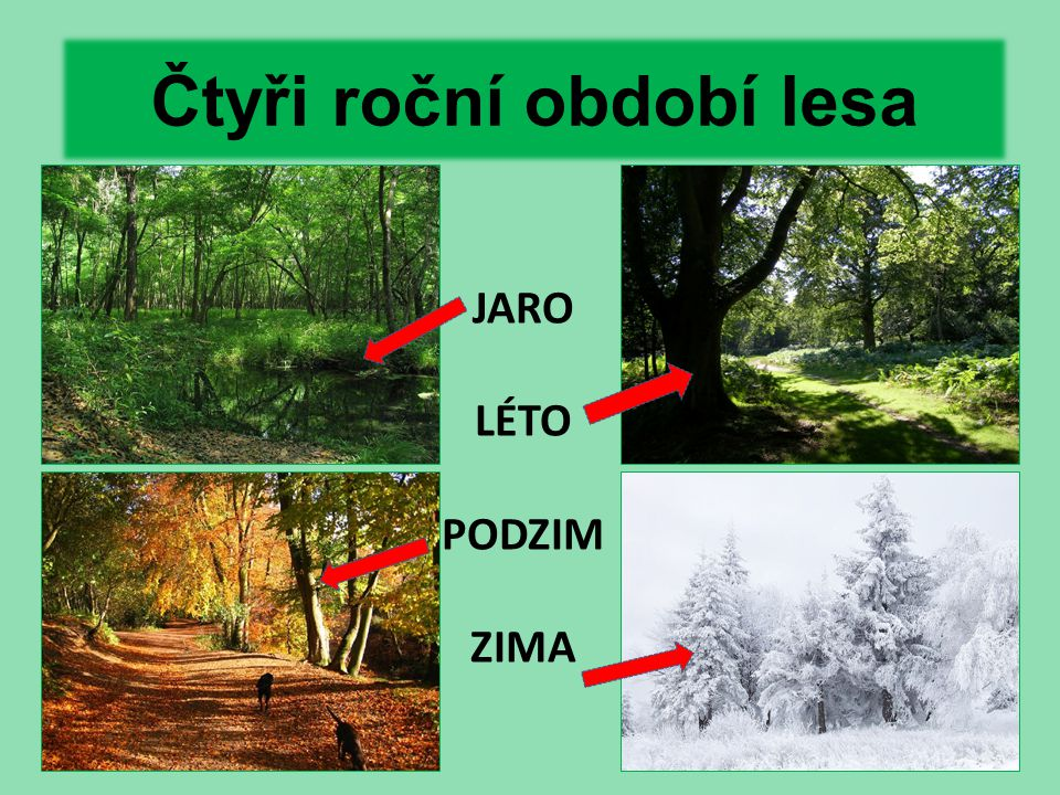 Čtyři roční období lesa