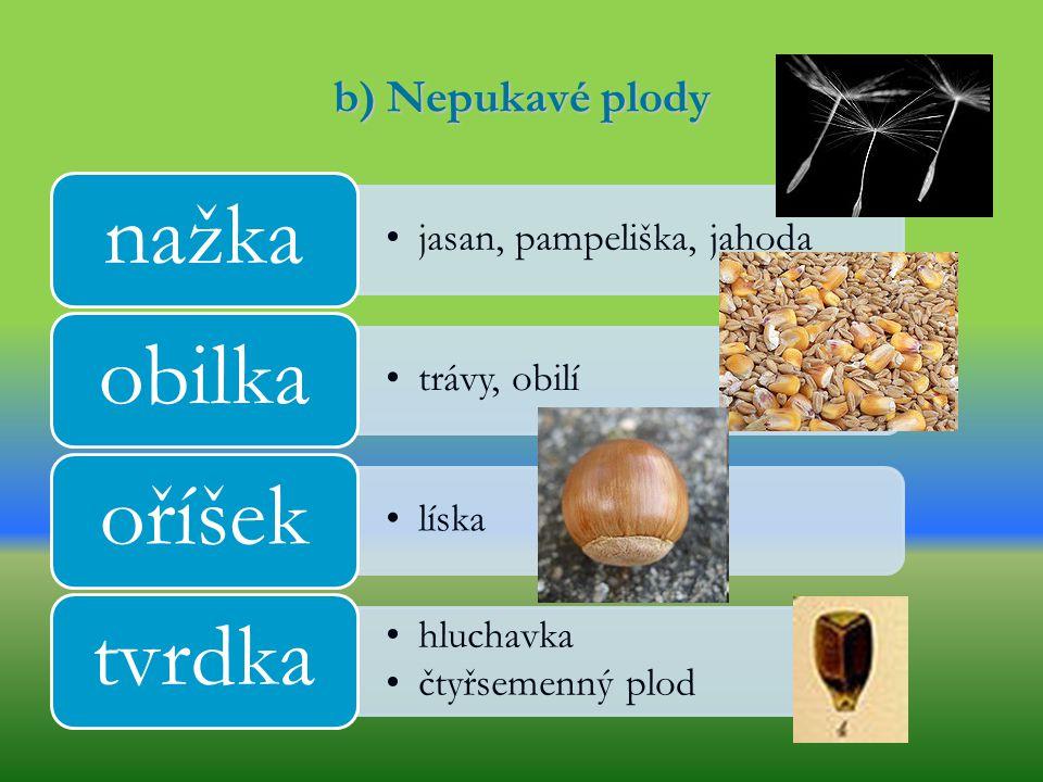 nažka obilka oříšek tvrdka b) Nepukavé plody jasan, pampeliška, jahoda