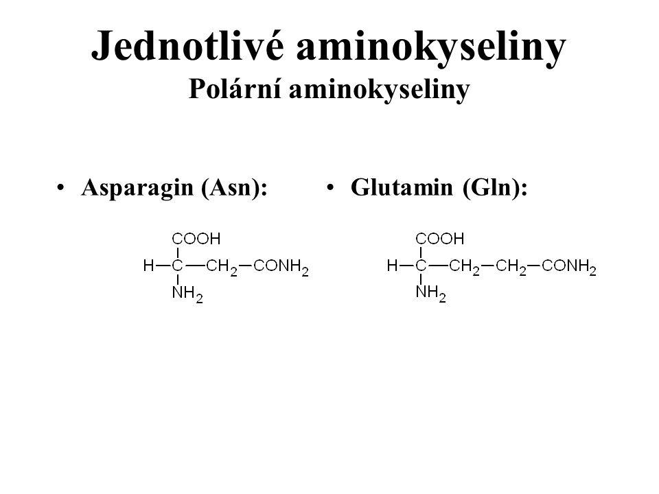 Jednotlivé aminokyseliny Polární aminokyseliny