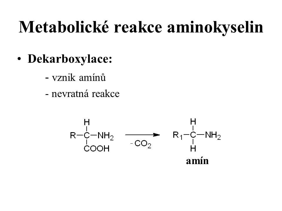 Metabolické reakce aminokyselin