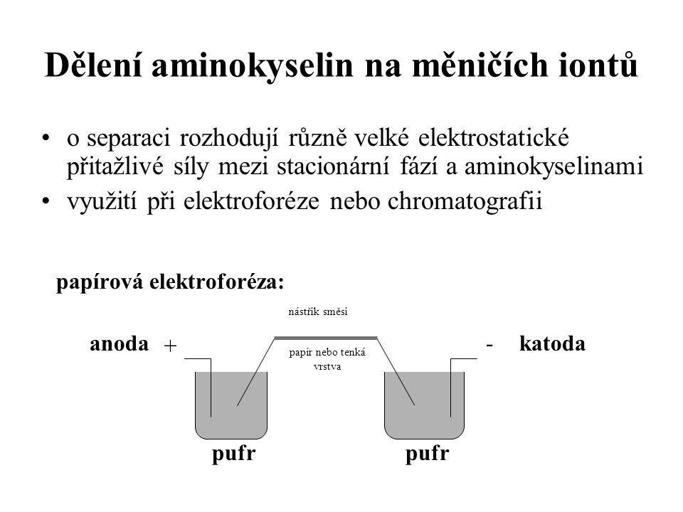 Dělení aminokyselin na měničích iontů
