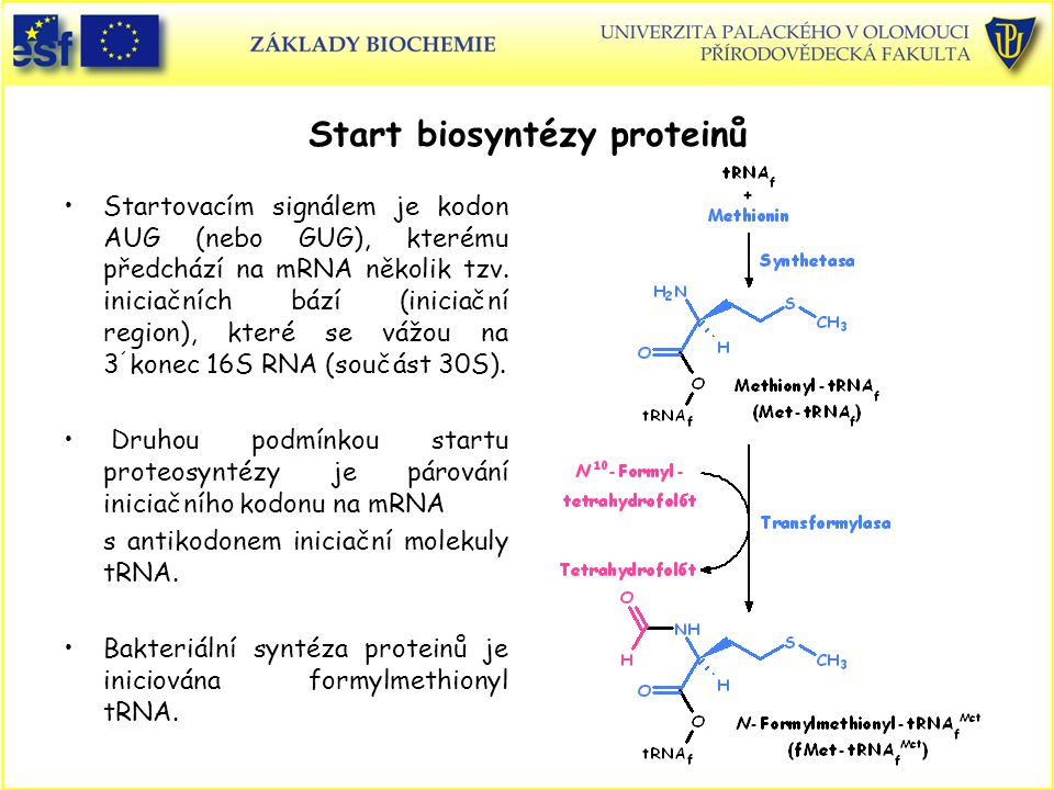 Start biosyntézy proteinů