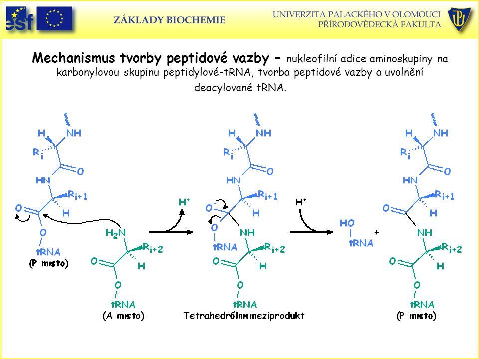 Mechanismus tvorby peptidové vazby – nukleofilní adice aminoskupiny na karbonylovou skupinu peptidylové-tRNA, tvorba peptidové vazby a uvolnění deacylované tRNA.