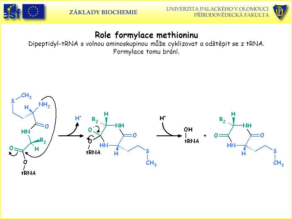 Role formylace methioninu Dipeptidyl-tRNA s volnou aminoskupinou může cyklizovat a odštěpit se z tRNA. Formylace tomu brání.