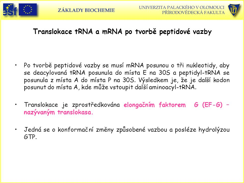 Translokace tRNA a mRNA po tvorbě peptidové vazby