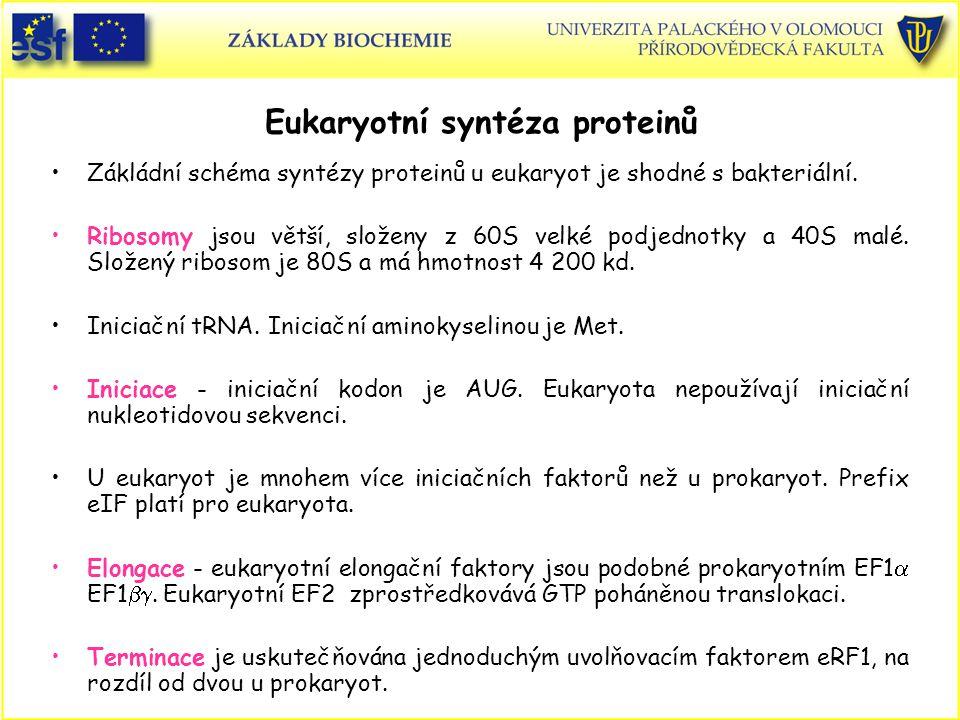 Eukaryotní syntéza proteinů