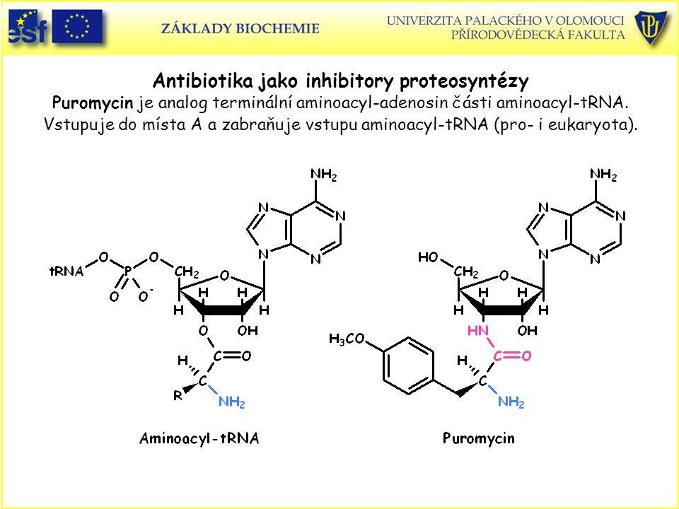 Antibiotika jako inhibitory proteosyntézy Puromycin je analog terminální aminoacyl-adenosin části aminoacyl-tRNA. Vstupuje do místa A a zabraňuje vstupu aminoacyl-tRNA (pro- i eukaryota).