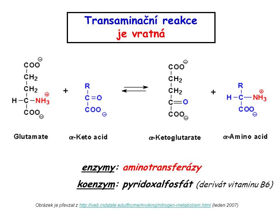 Transaminační reakce je vratná enzymy: aminotransferázy