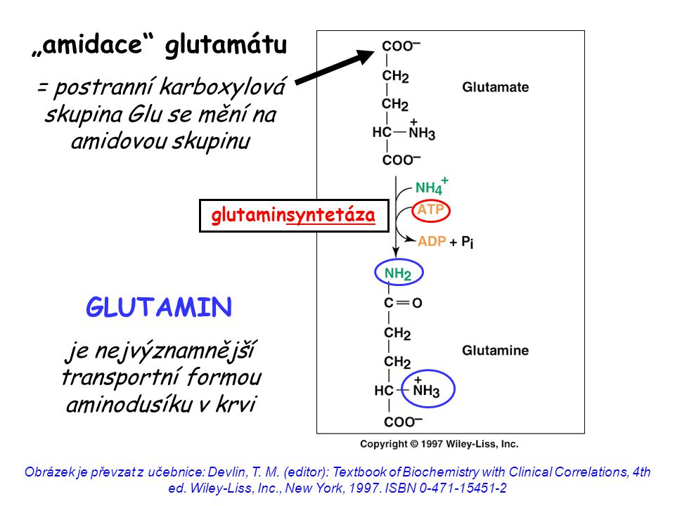 """amidace glutamátu GLUTAMIN"