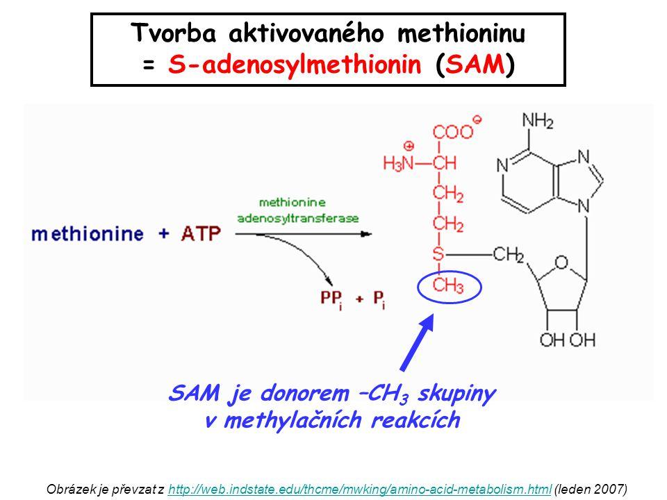 Tvorba aktivovaného methioninu = S-adenosylmethionin (SAM)