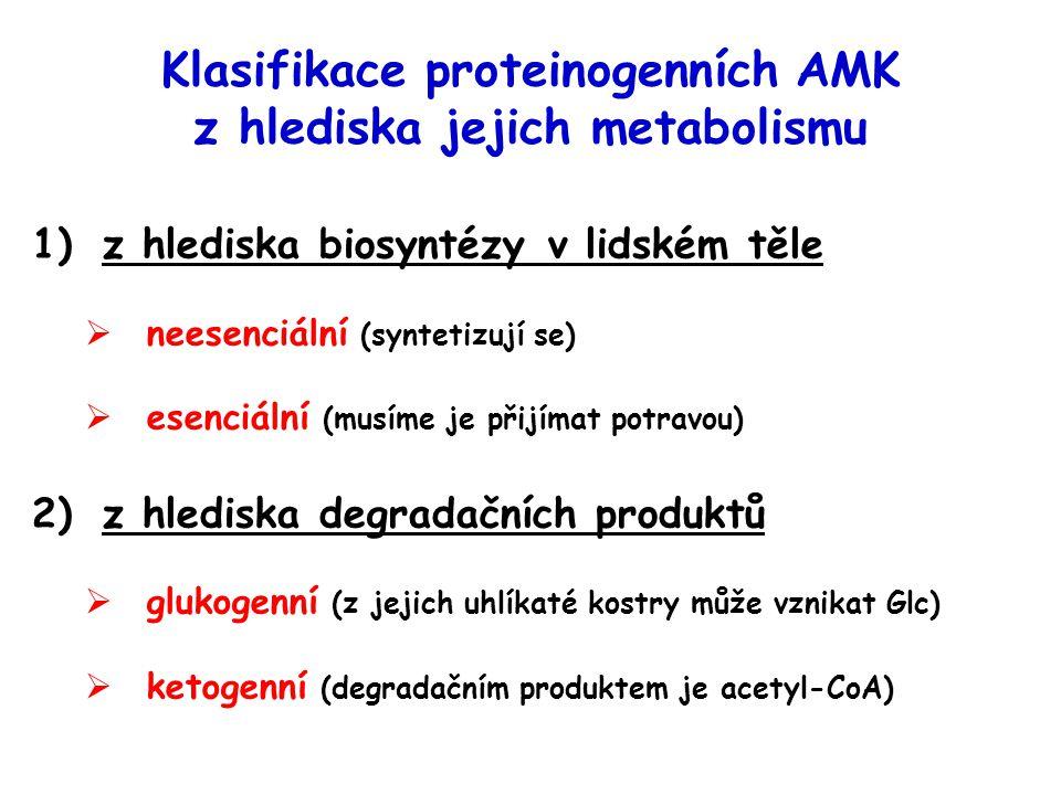 Klasifikace proteinogenních AMK z hlediska jejich metabolismu