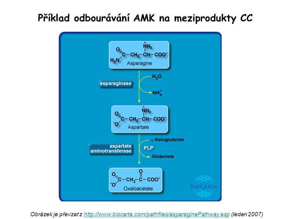 Příklad odbourávání AMK na meziprodukty CC