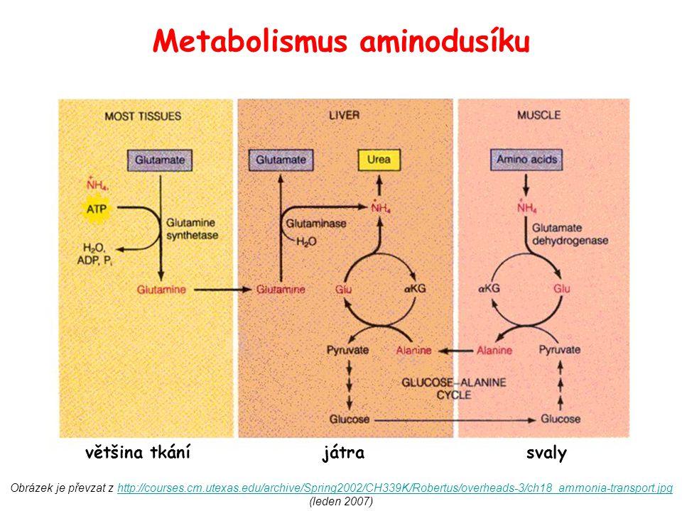 Metabolismus aminodusíku