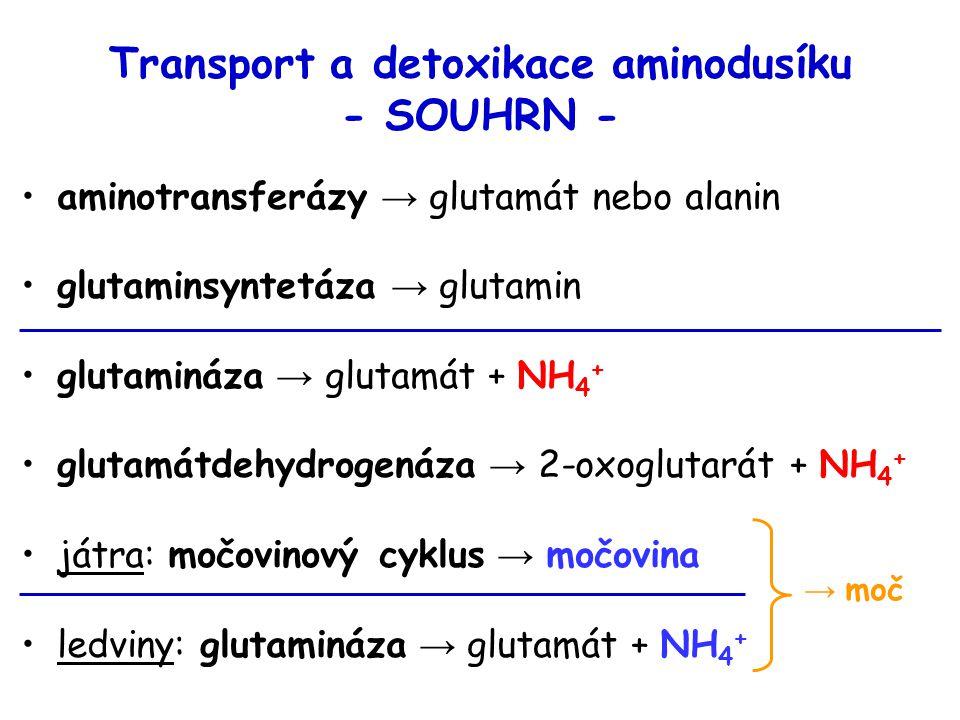 Transport a detoxikace aminodusíku - SOUHRN -