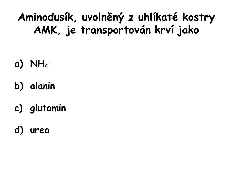 Aminodusík, uvolněný z uhlíkaté kostry AMK, je transportován krví jako