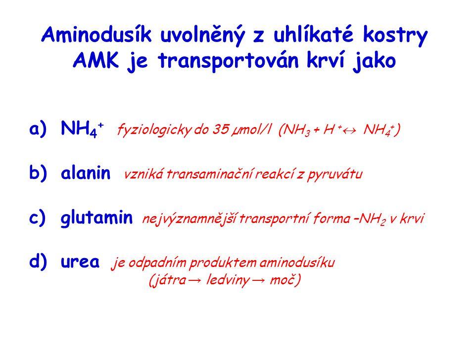 Aminodusík uvolněný z uhlíkaté kostry AMK je transportován krví jako