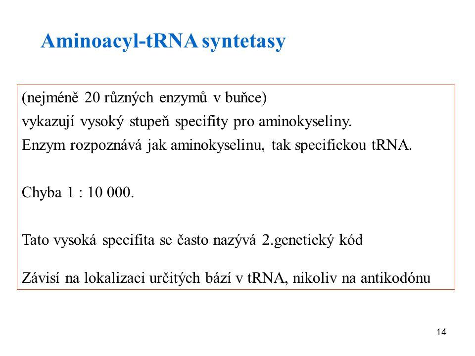 Aminoacyl-tRNA syntetasy