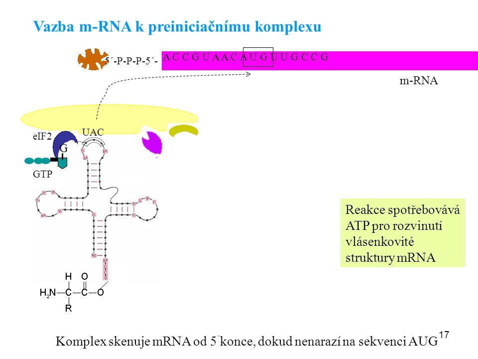 Vazba m-RNA k preiniciačnímu komplexu