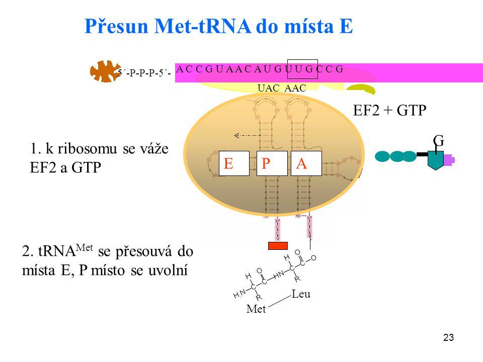 Přesun Met-tRNA do místa E