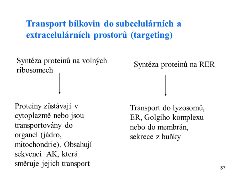 Transport bílkovin do subcelulárních a extracelulárních prostorů (targeting)