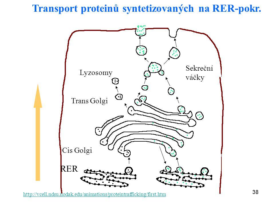Transport proteinů syntetizovaných na RER-pokr.