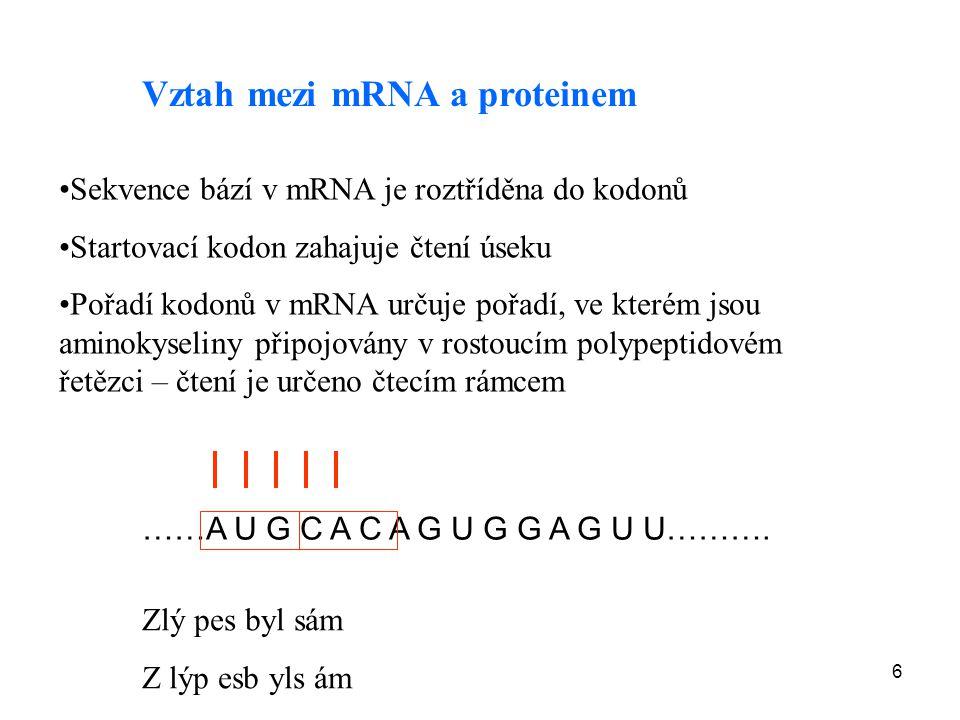 Vztah mezi mRNA a proteinem