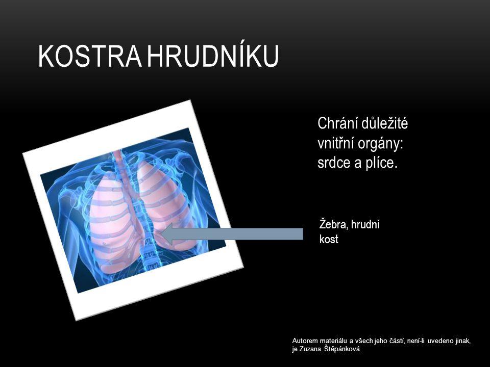 KOSTRA HRUDNÍKU Chrání důležité vnitřní orgány: srdce a plíce.