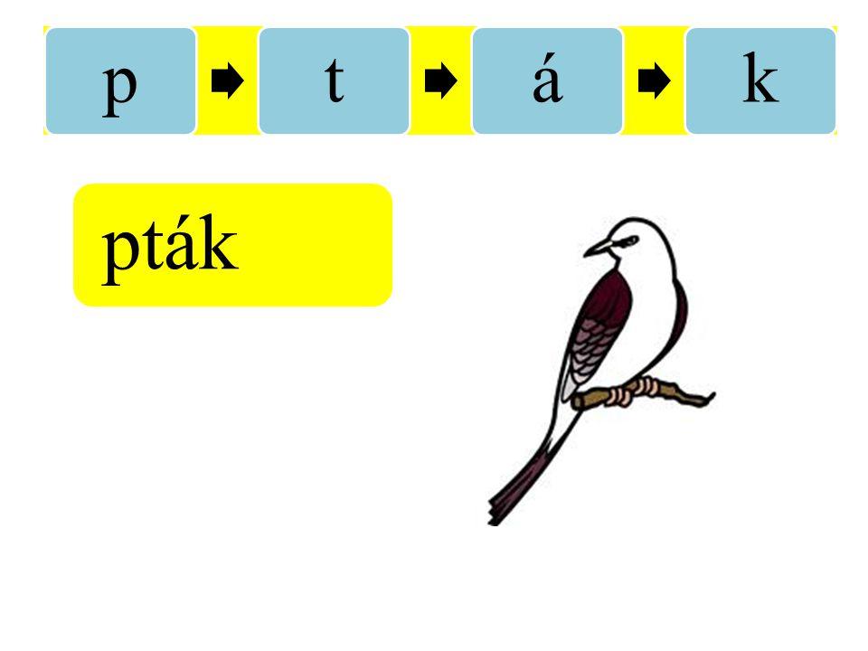 p t á k pták