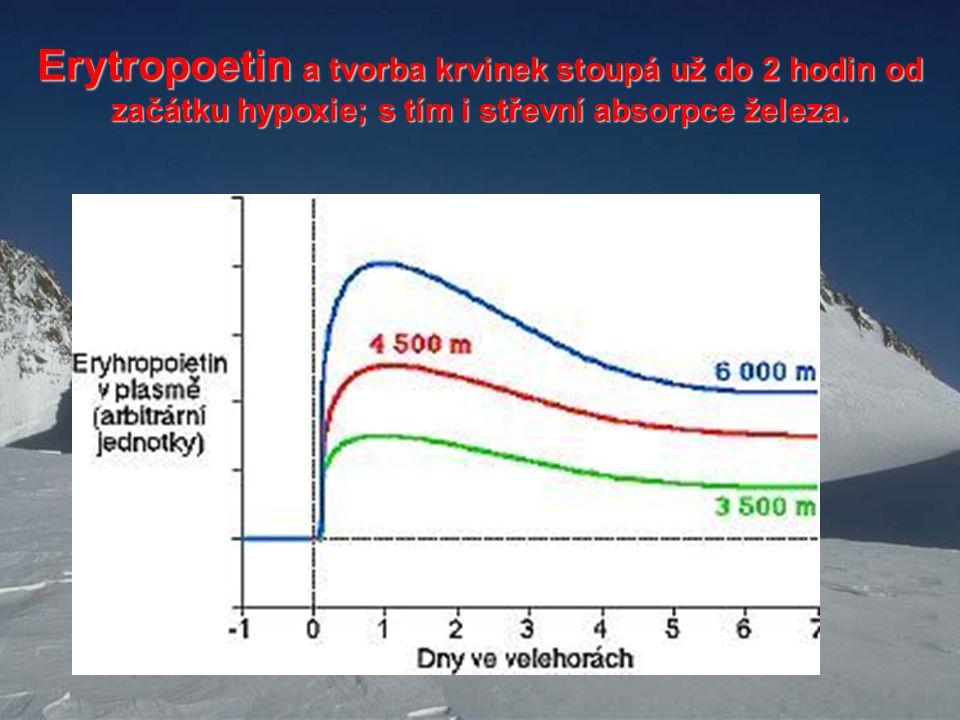 Erytropoetin a tvorba krvinek stoupá už do 2 hodin od začátku hypoxie; s tím i střevní absorpce železa.